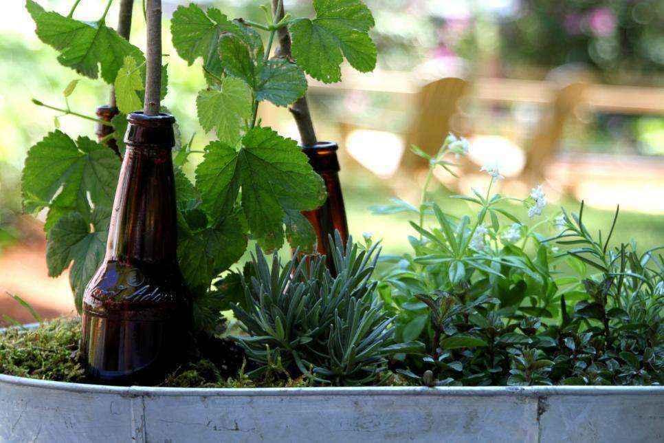 Как устроить декоративный пивной сад