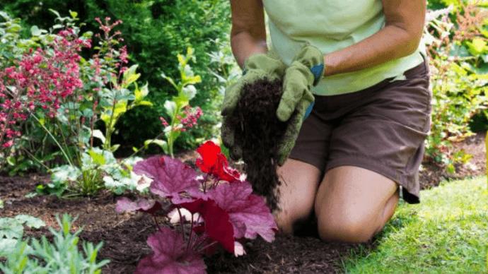 6-gardening-tips
