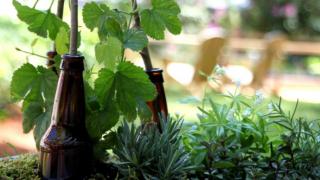 beer-garden-320x180