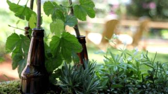 Как устроить декоративный пивной сад 1 | Дока-Мастер