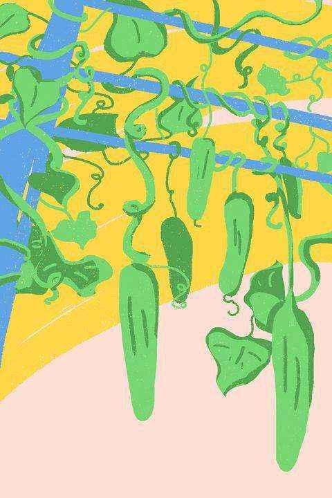Как правильно выращивать огурцы