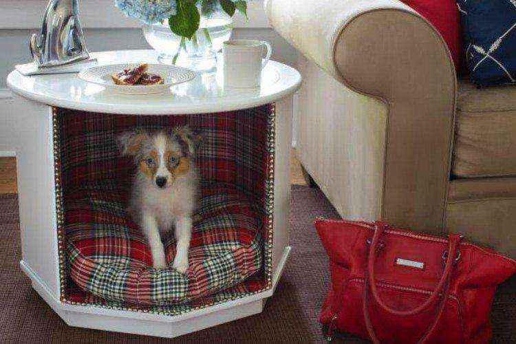 собачья будка в столе