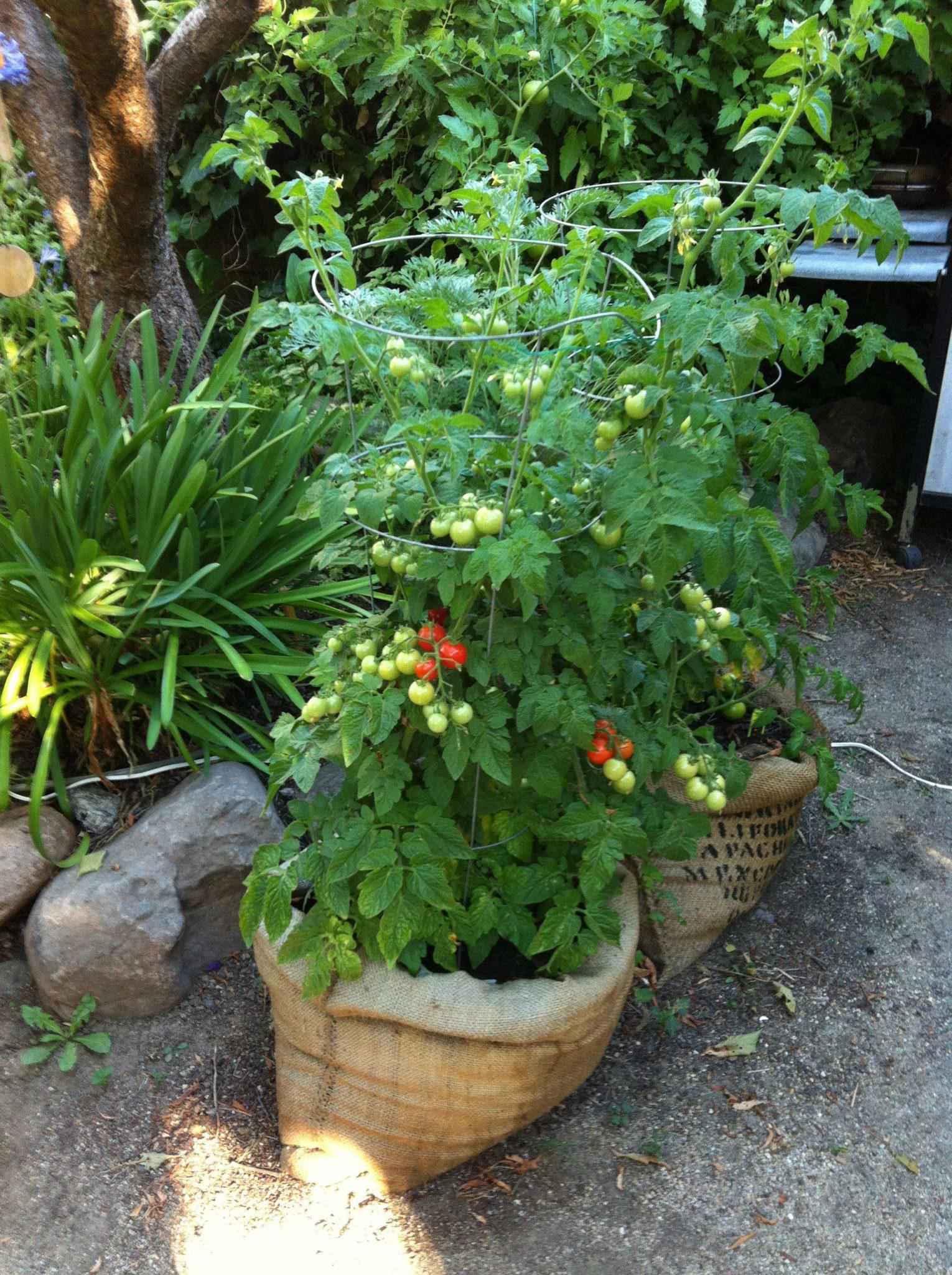 image21-2   Как сделать уютный сад в ограниченном пространстве и при ограниченном бюджете