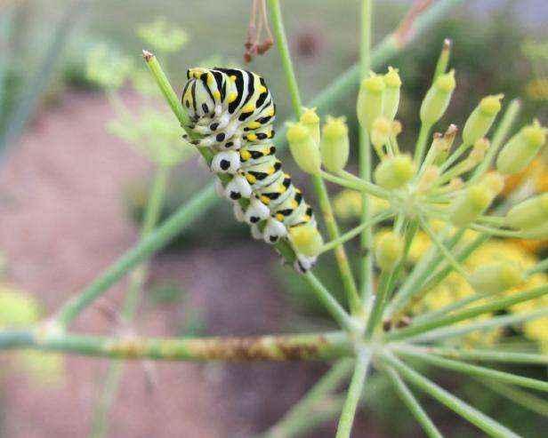 6 советов начинающим садоводам