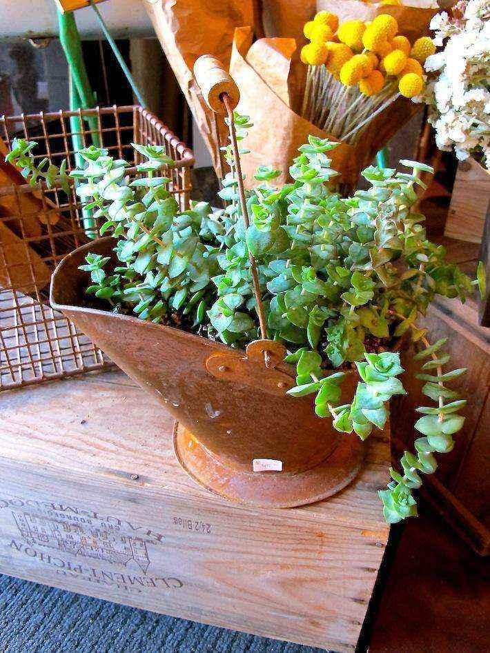image65   Как сделать уютный сад в ограниченном пространстве и при ограниченном бюджете