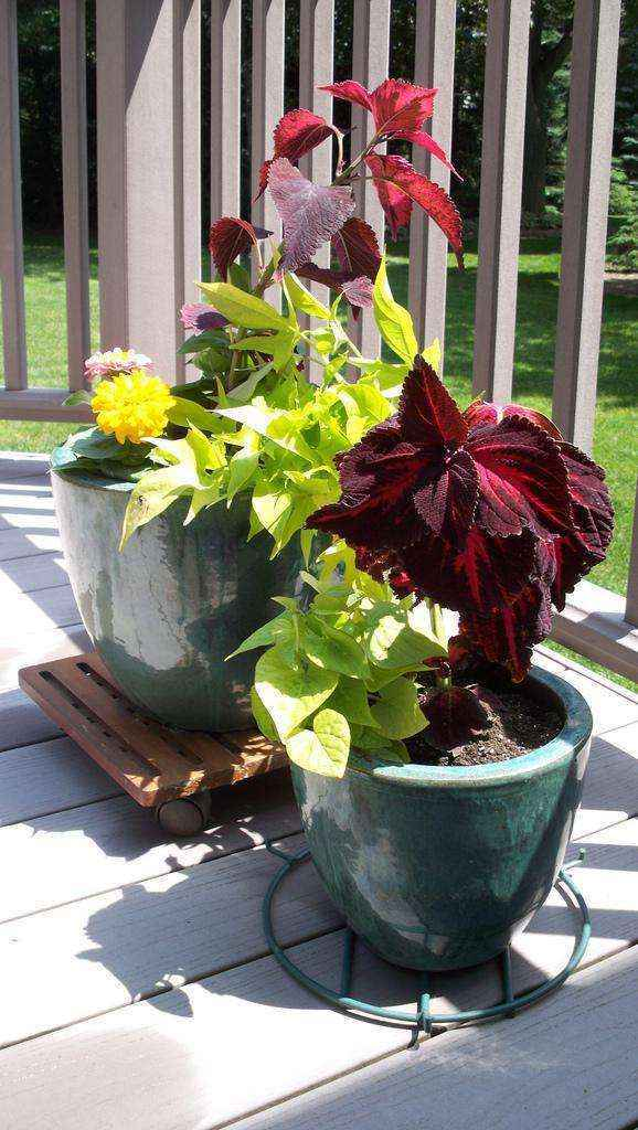 image7-16   Как сделать уютный сад в ограниченном пространстве и при ограниченном бюджете