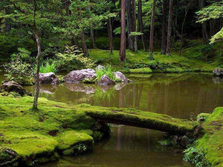 Золотые правила организации японского сада