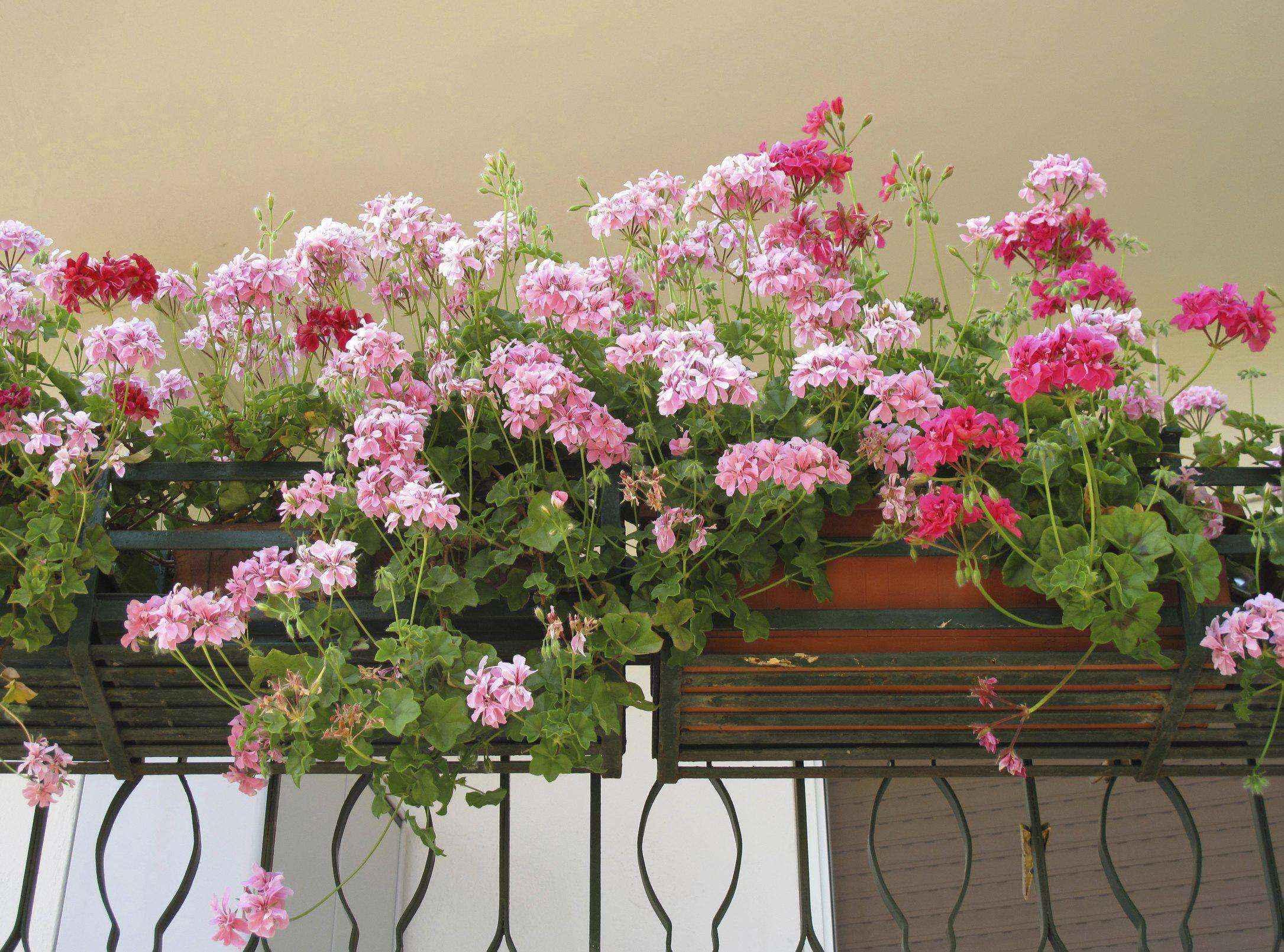 Как сделать уютный сад в ограниченном пространстве и при ограниченном бюджете
