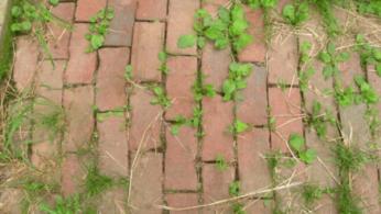 Как сделать натуральный истребитель сорняков 2 | Дока-Мастер