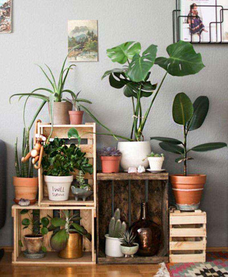 plantas-8 | 10 великолепных идей для украшения вашего дома растениями которые вам понравятся