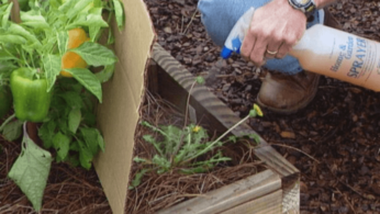Как победить сорняки без использования химии 1 | Дока-Мастер