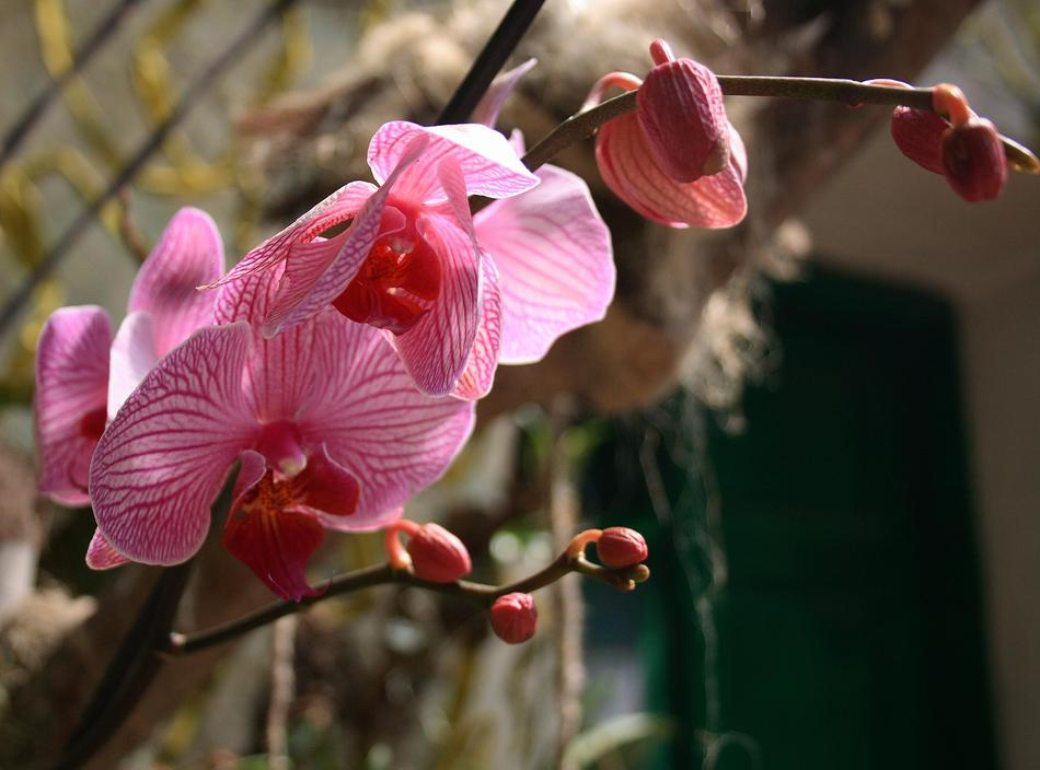 kak-uhazhivat-za-orhidejami-image1 | Как ухаживать за орхидеями