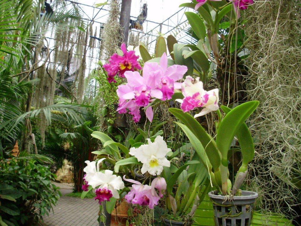 kak-uhazhivat-za-orhidejami-image2 | Как ухаживать за орхидеями