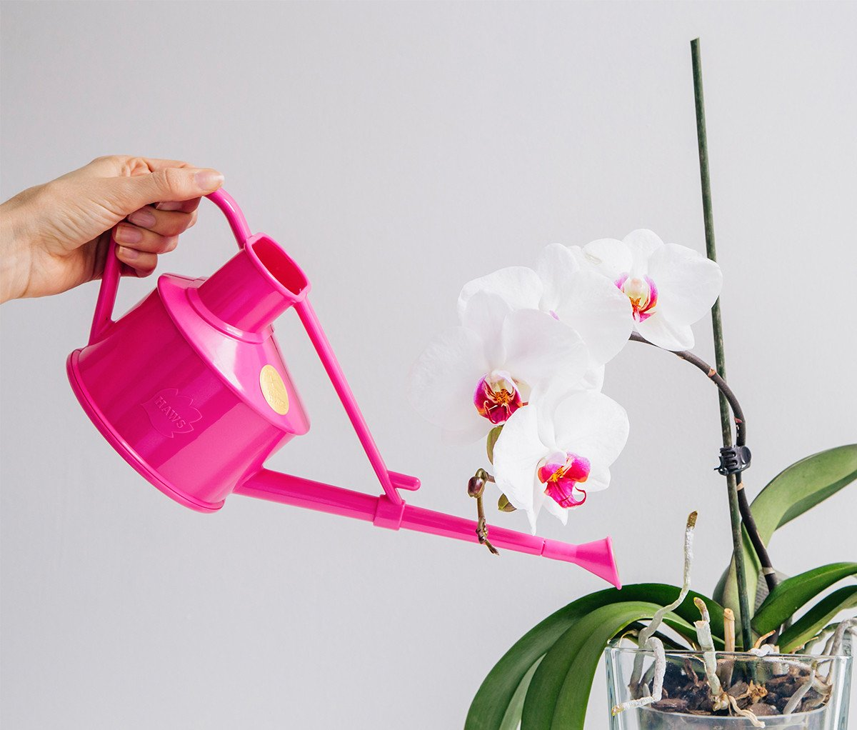 kak-uhazhivat-za-orhidejami-image3 | Как ухаживать за орхидеями
