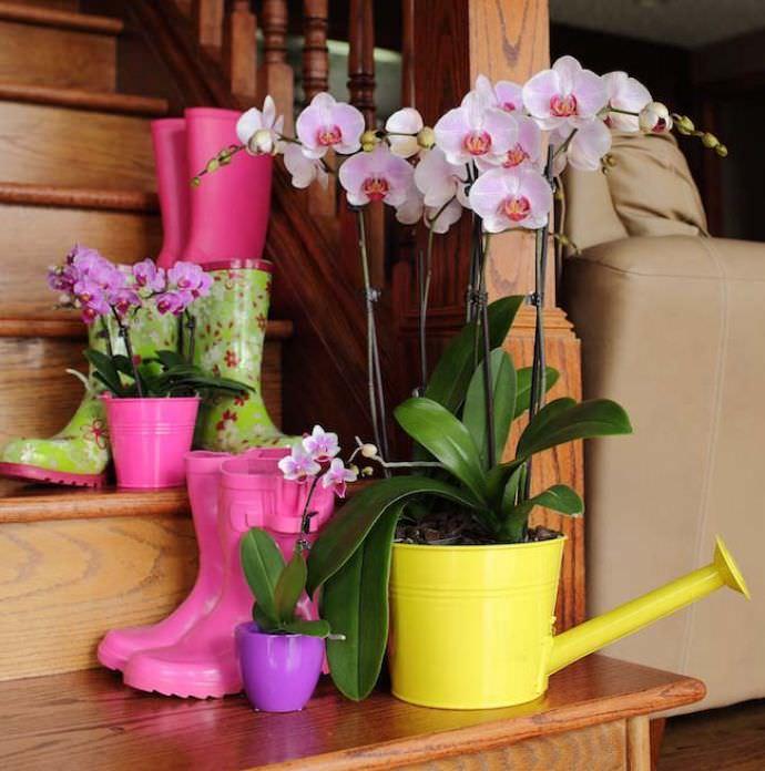 kak-uhazhivat-za-orhidejami-image4 | Как ухаживать за орхидеями