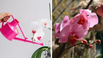 орхидея уход +в домашних условиях