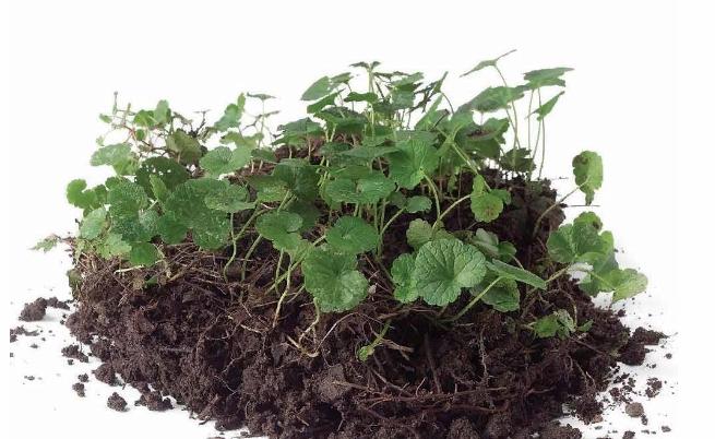 Как сделать кромки садовых грядок - image1